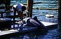Bahamas 1988 (301) Paradise Island Paradise Lake (23543196204).jpg
