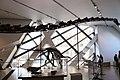 Barosaurus neck.jpg
