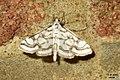 Beautiful china-mark (FG) (15444874752).jpg