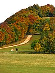 Beech Trees In Autumn - panoramio.jpg