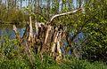Beekdal Linde Bekhofplas. Een waardevol natuurterrein van Staatsbosbeheer in de provincie Friesland 17.jpg