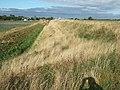 Behind the bank - geograph.org.uk - 1513699.jpg
