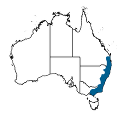 Bell Miner Distribution From Atlas Living Australia.png