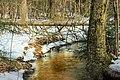 Bennett Branch Forest (2) (13208780244).jpg
