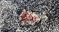 Big garnet amphibolite (Precambrian; Warrensburg, Adirondack Mountains, New York State, USA) 14.jpg