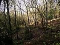 Birch wood - geograph.org.uk - 2157638.jpg