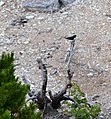 Bird in the Waste (14862055363).jpg