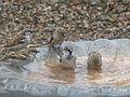 Birds at Kaas.jpg