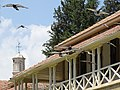 Birds in Flight by Facade - Northern Nicosia - Turkish Republic of Northern Cyprus (28188973750).jpg