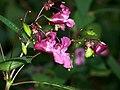 Blüte - panoramio (1).jpg