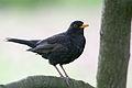 Blackbird Lodz(Poland)(js)07.jpg