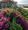 Blumen über dem Fluss in Santa Cruz Madeira.jpg