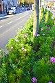Blumenwiese Mariahilfstraße.jpg