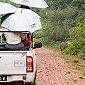 Borneo Elephant (15026533105).jpg