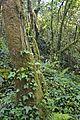 Bosque - Bertamirans - Rio Sar - 004.JPG