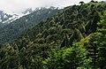 Bosque primario 01.jpg