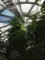Botanisk have - panoramio.jpg