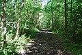 Bridleway, Oldbury Woods - geograph.org.uk - 856796.jpg