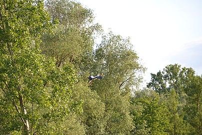 Bruchwiesen bei Büttelborn DSC 0267 04.jpg