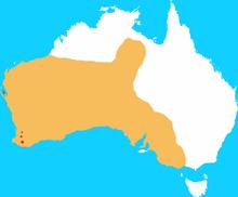 Woylie Wikipedia
