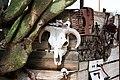 Buffalo Skull - Phoenix AZ.jpg