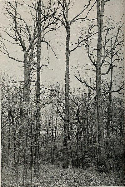 File:Bulletin (1944) (20403011346).jpg