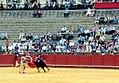 Bullfight06 (22253881).jpg