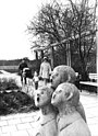 Bundesarchiv Bild 183-N0320-0022, Neubrandenburg, Kulturpark.jpg