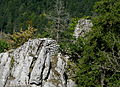 Burg Hahnenkamm, der Kamm 1.jpg