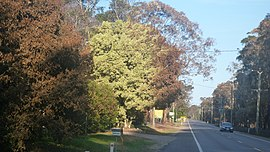 Burnttree Campvale 02 20131020.jpg