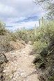Butcher Jones Trail to Pinter's Point Loop, Tonto National Park, Saguaro Lake, Ft. McDowell, AZ - panoramio (133).jpg