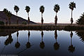 CA Fan Palms Reflect in Lake Tuendae.jpg