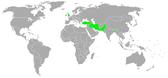 החברות בברית בגדד