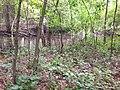CP 77 - panoramio.jpg