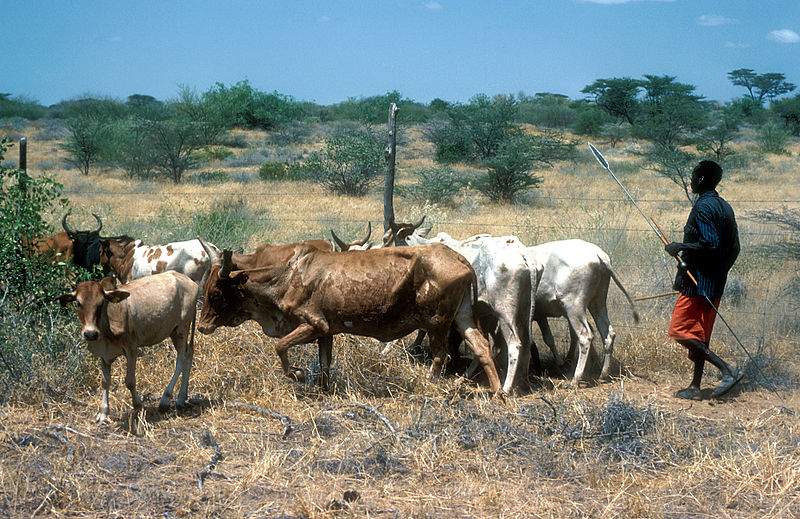 File:CSIRO ScienceImage 4421 Tribesman guarding cattle in Kenya Africa 1981.jpg