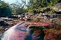 Caño Cristales, Colombia (39744566891).jpg