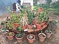 Cactus Family.jpg