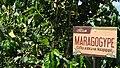 Café Plantage in Armenia 52.jpg