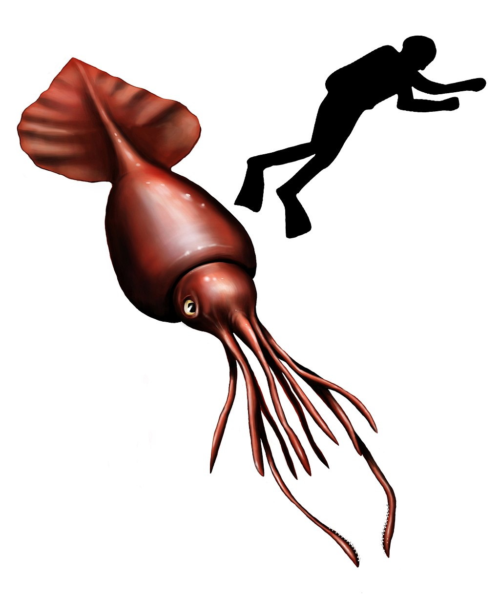 Colossal squid  Wikipedia