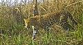 Camouflaged Predator.jpg