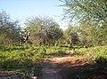 Campo adentro - panoramio - gustavochavez.jpg