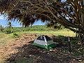 Campsite 20 at Kipahulu Campground, 2020 (6bdab4b3-eba0-4dd0-8d0e-a4294142d7fd).jpg