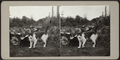 Cat standing in a field, from Robert N. Dennis collection of stereoscopic views.png