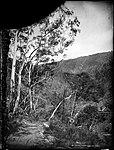 Cave Road, Jenolan (4903241115).jpg