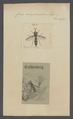 Ceria - Print - Iconographia Zoologica - Special Collections University of Amsterdam - UBAINV0274 039 02 0002.tif