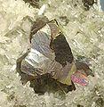 Chalcopyrite-Quartz-261774.jpg