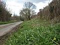 Chilbridge, snowdrops - geograph.org.uk - 1773282.jpg