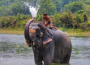 Chitwan national Park.jpg