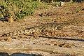 Chobe River Front, Botswana (2625498112).jpg