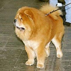 hund med blå tunge